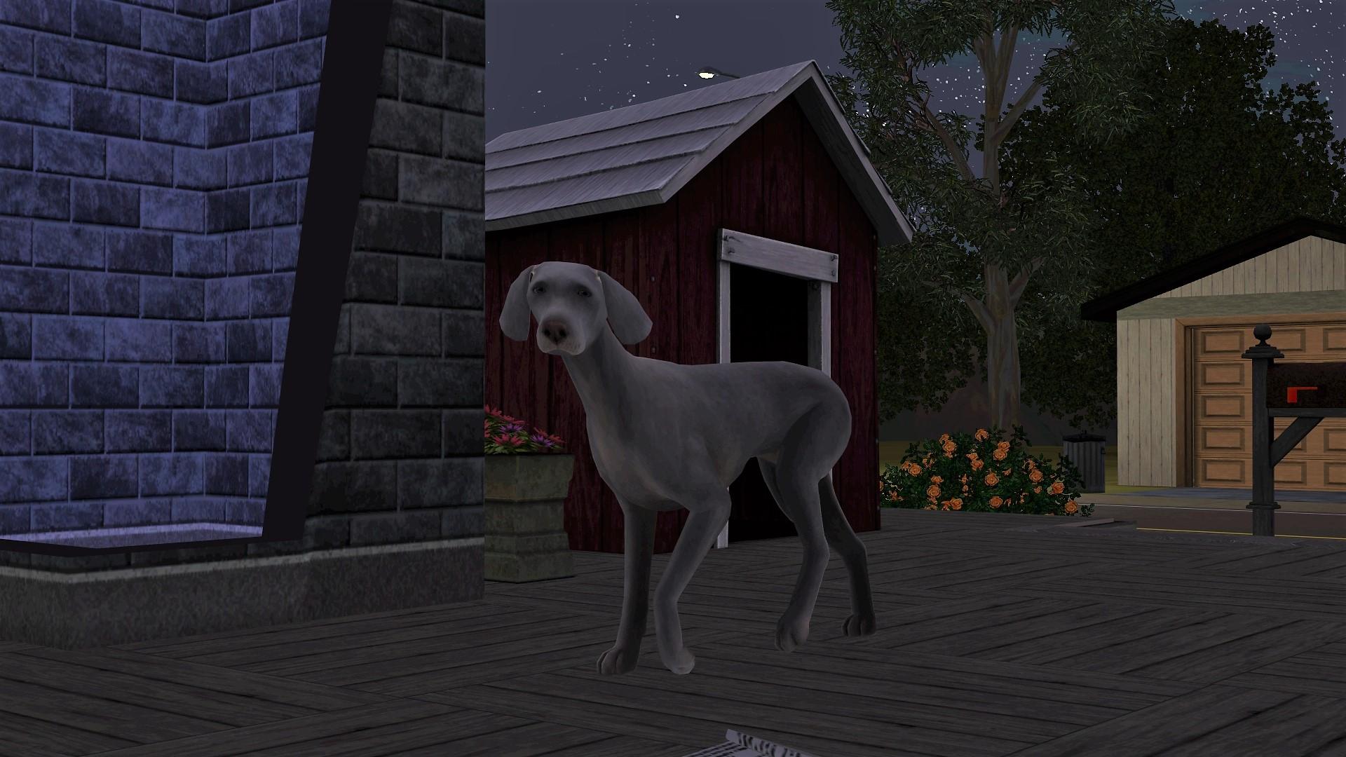 Sims 3 Stray Dog