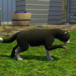 Sims 3 How to Get Rid of Fleas